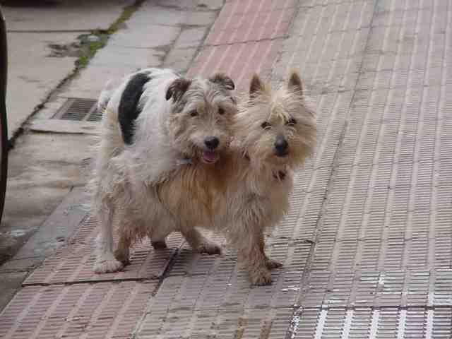 El ladrido de los perros taringa - Imagenes de animales apareandose ...